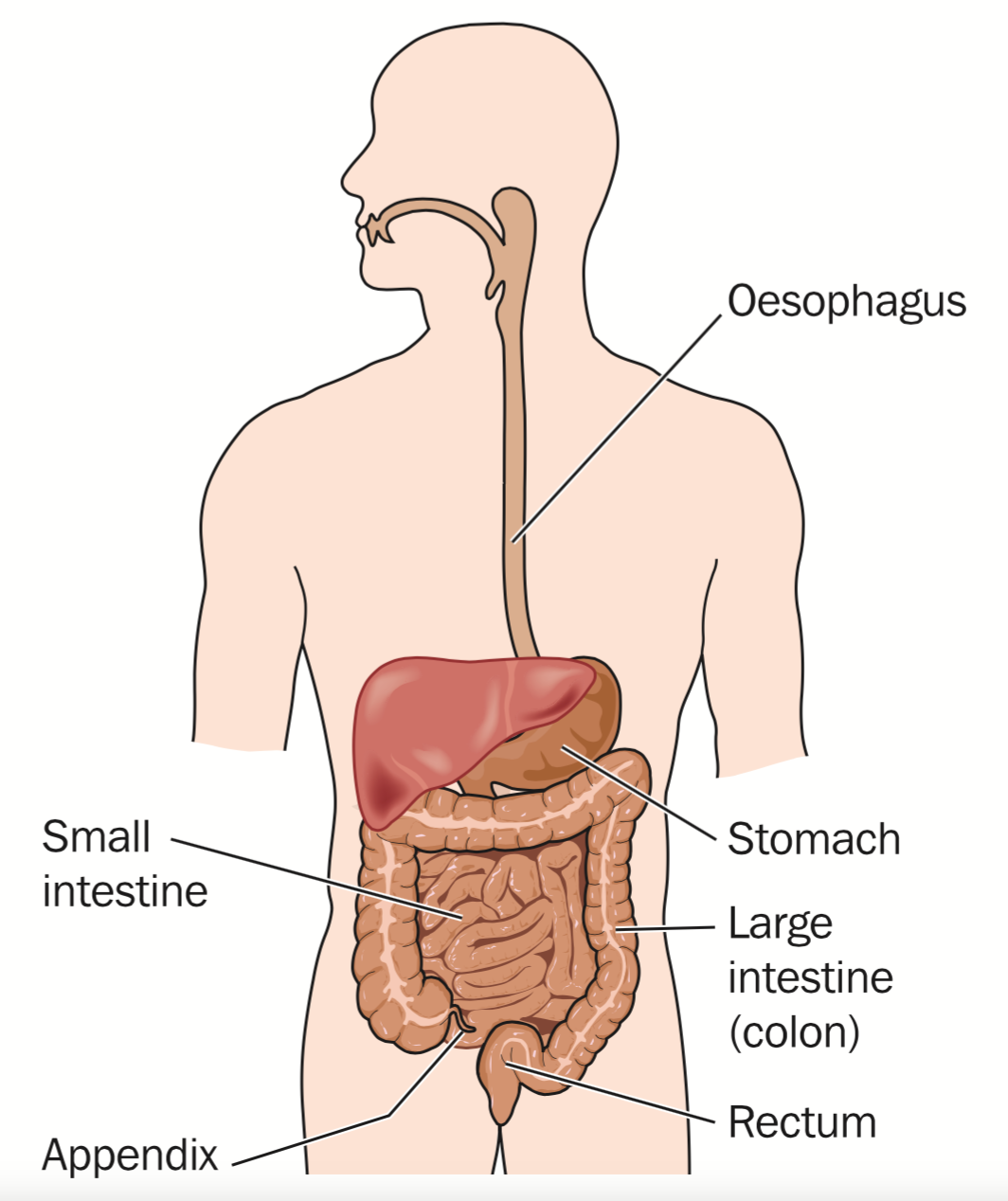What should I do if my stomach hurts