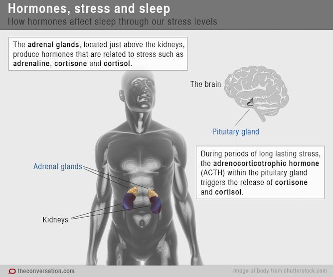 Chemical messengers: how hormones help us sleep