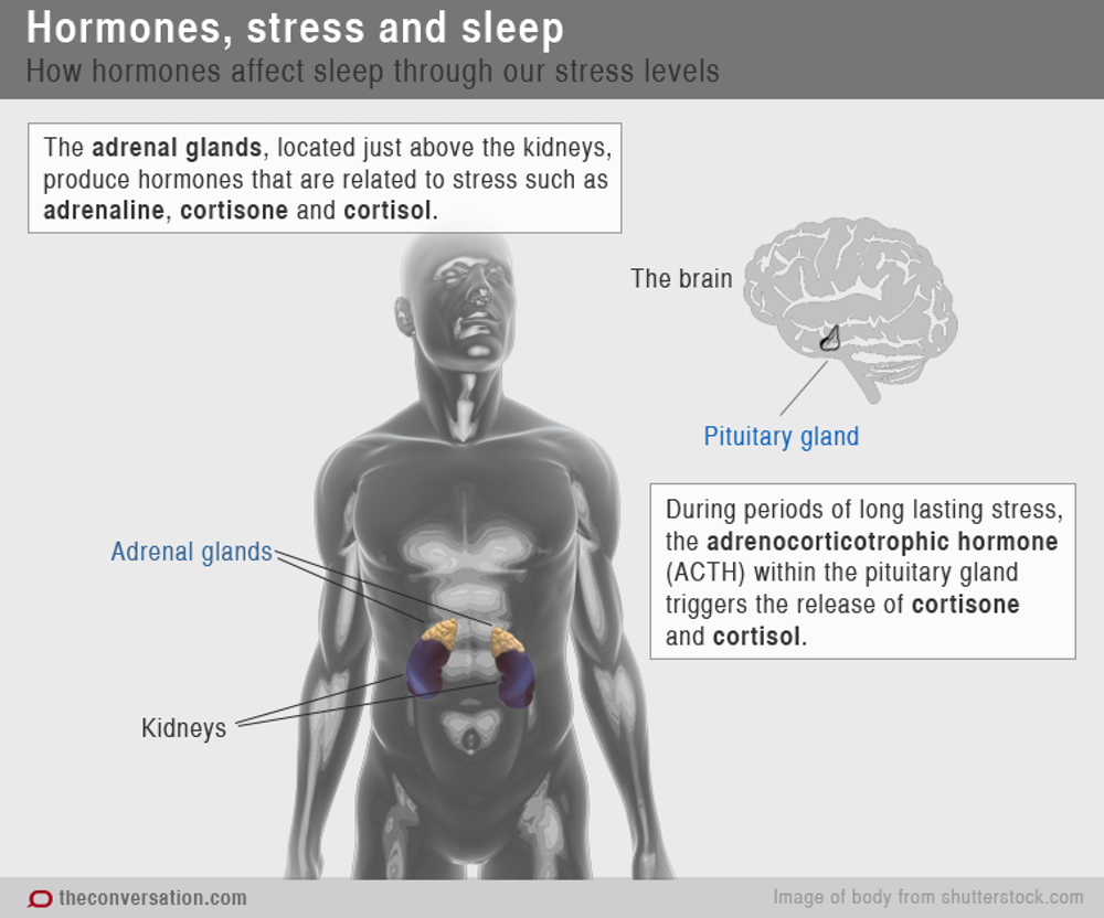Chemical Messengers How Hormones Help Us Sleep