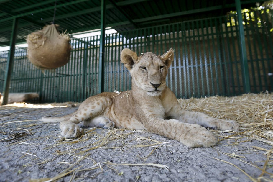 animals should be kept in zoos for and against