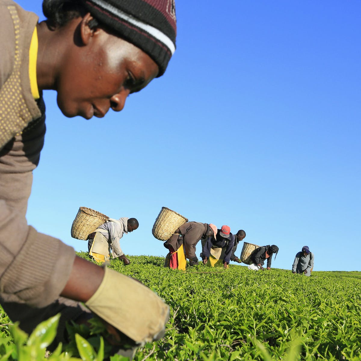 What Africa can learn from China about growing its agribusiness sector