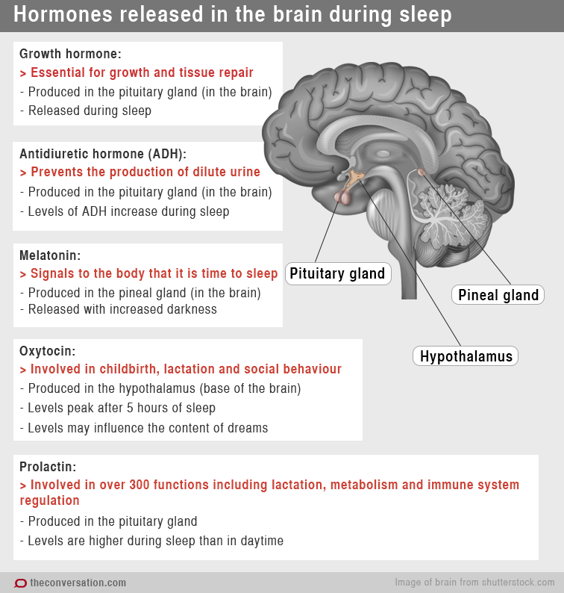 Stop And Go Auto >> Chemical messengers: how hormones help us sleep