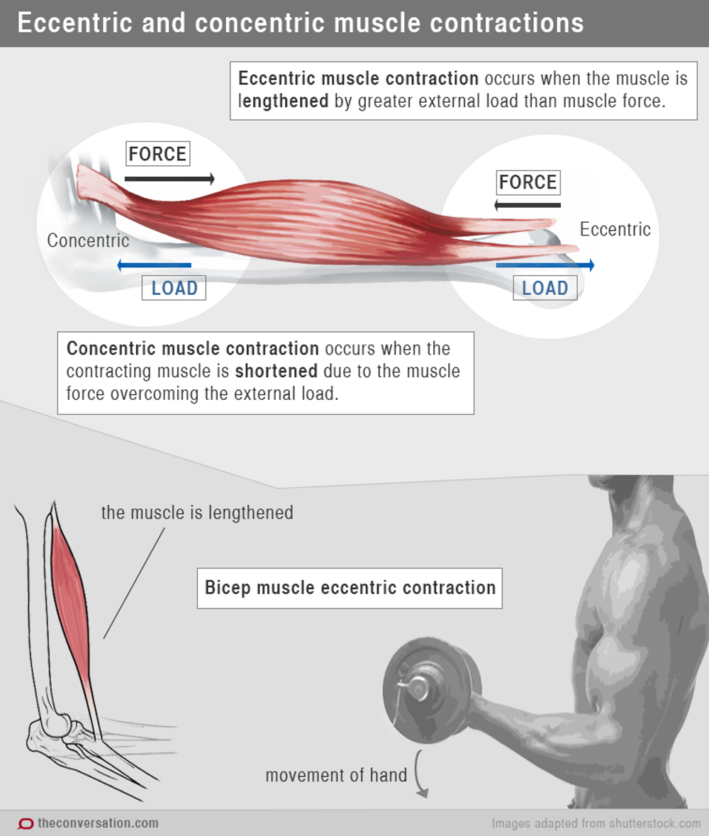 Resistance Training Exercise Variables | Muscle & Strength