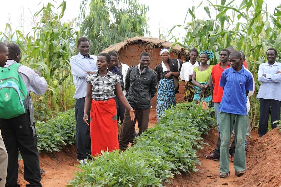 How low-tech farming innovations can make African farmers climate