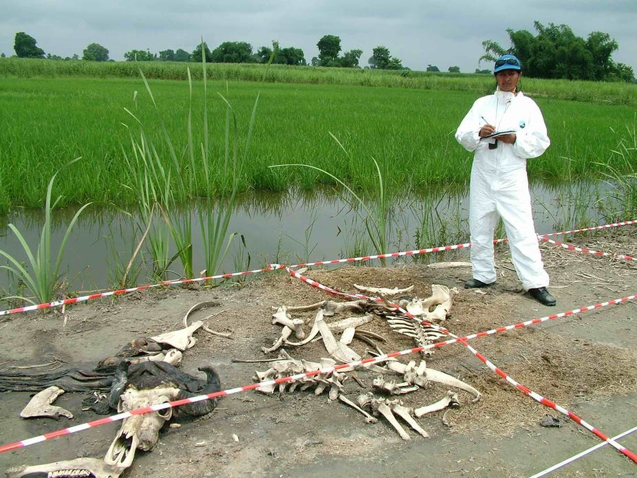The smell of death: its chemical pattern could become a powerful