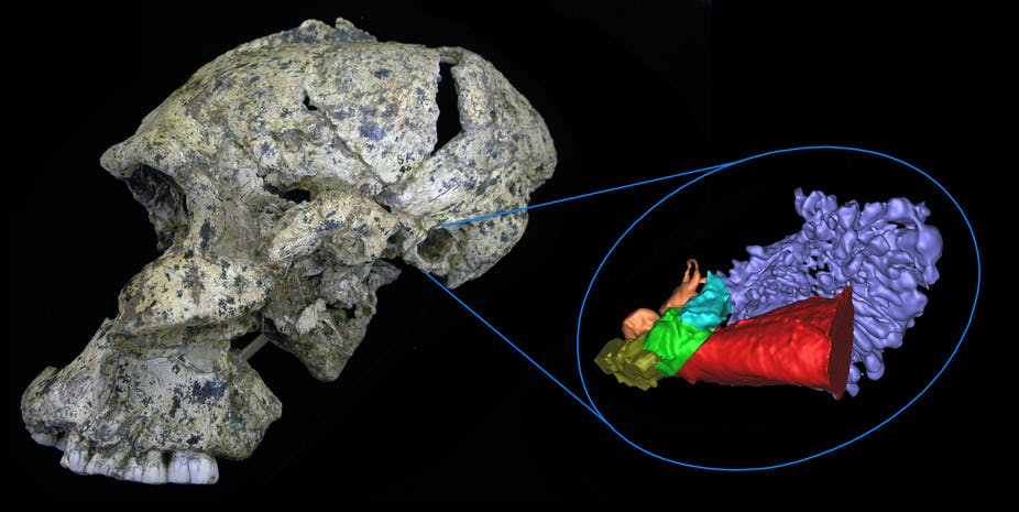 Testing ancient human hearing via fossilized ear bones
