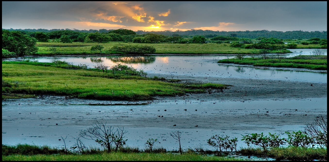 wetland essay - wetland restoration most people think they know a wetland when they see one, but the delineation of wetlands for the purpose of granting permits has proven enormously controversial.