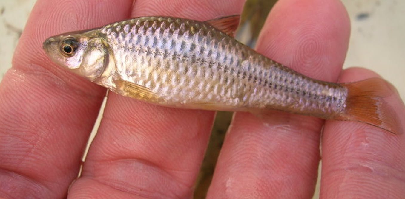 Freshwater fish china - 9xcm7f3s 1444318997