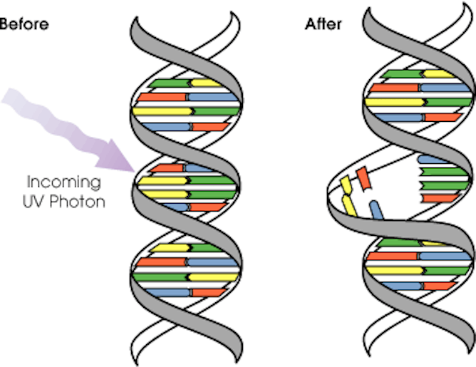 Chemistry Nobel DNA research lays foundation for new ways ...