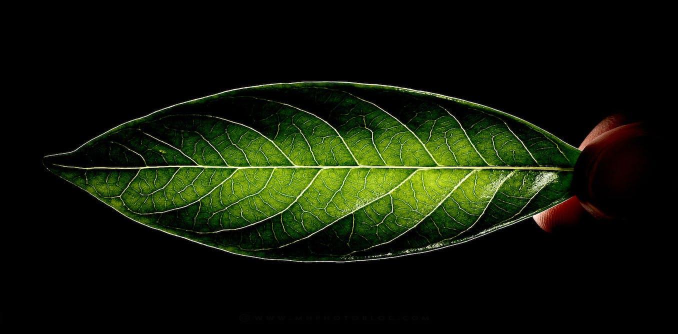 L cospiritualit qu est ce que c est - Qu est ce que l eco cuir ...