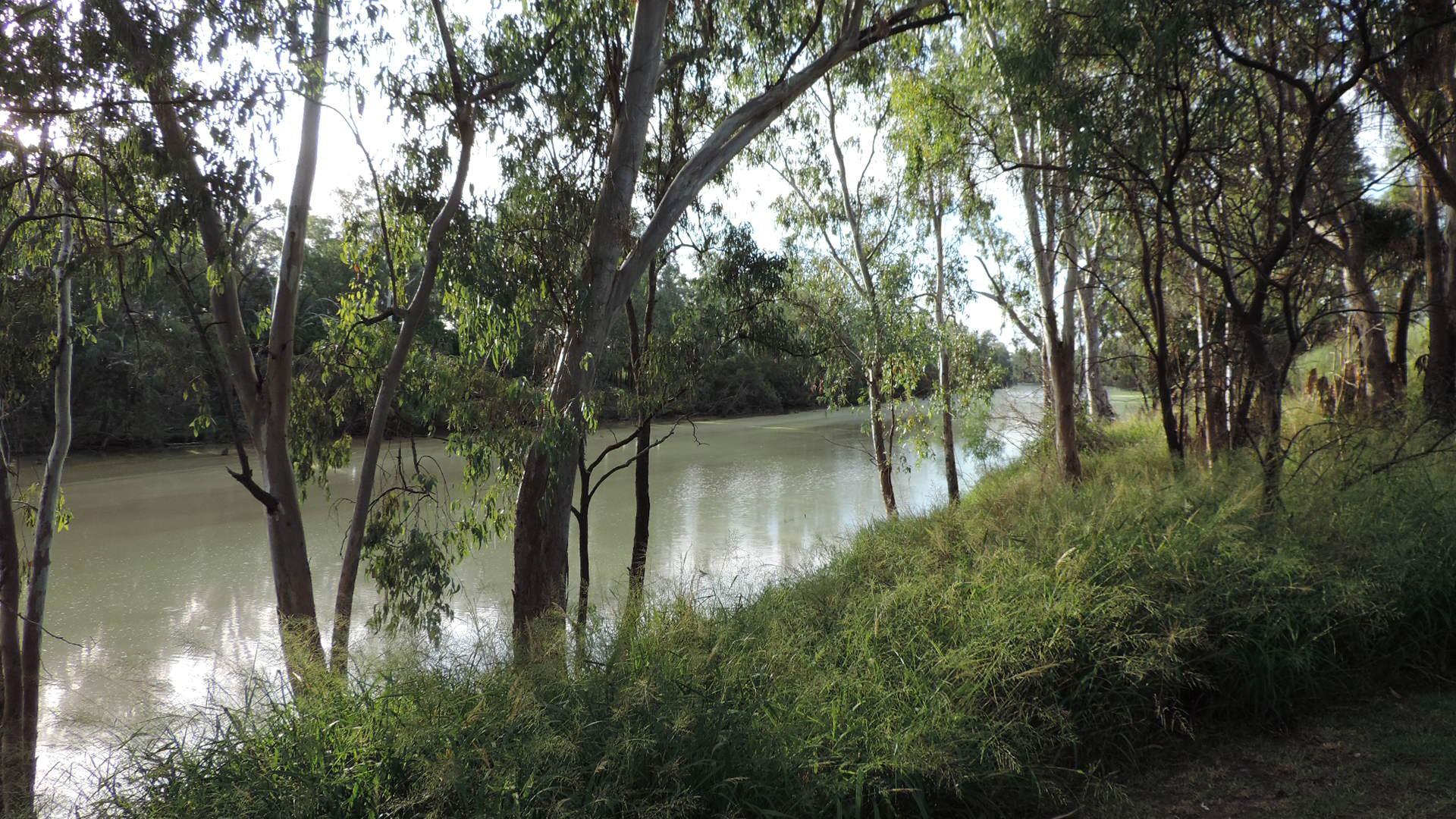 River flows drop as carbon dioxide creates thirstier plants
