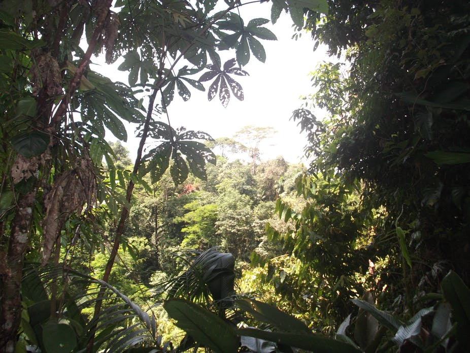 good news on rain forests they bounce back strong storing more